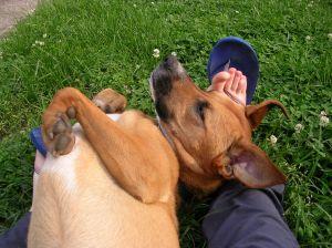 Daisy rolling on my legs 5.28.13
