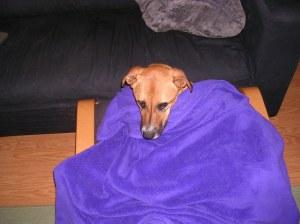 blanket daisy 2